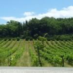 Montalcino Siena Tuscany Farm Sale