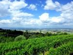 Montalcino Vendita Tenuta con Agriturismo - Siena Farm For Sale
