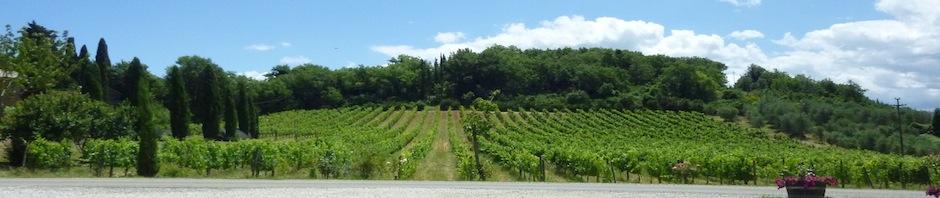 Montalcino Vendita Tenuta con Agriturismo