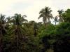 Tablas property-trees
